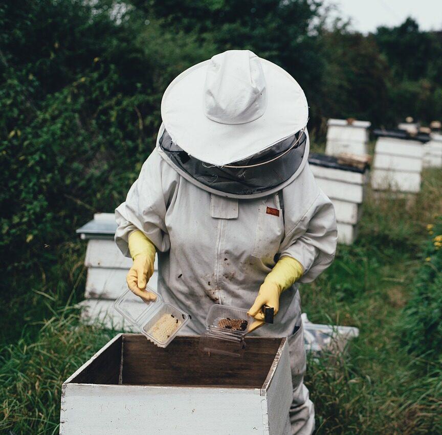 apiary-1866740_1280