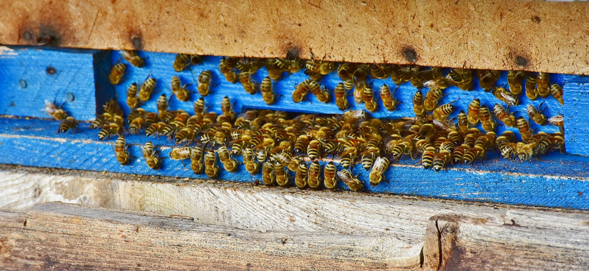 bees-3609059_1920